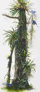 雨林的呼喚─探索雨林中的靈感