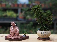 圖片:綠色遊戲—盆栽,泥塑陶藝創作展